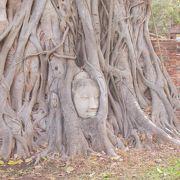 木の根に埋まった仏像の頭部と完全な仏像がある遺跡