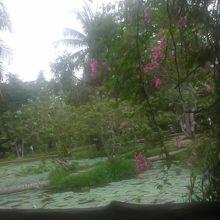 庭園も広々