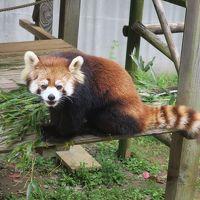 とくしま動物園 北島建設の森 写真