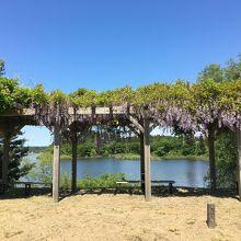小泉潟公園