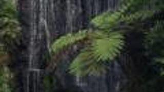 龍山寺 門前の滝