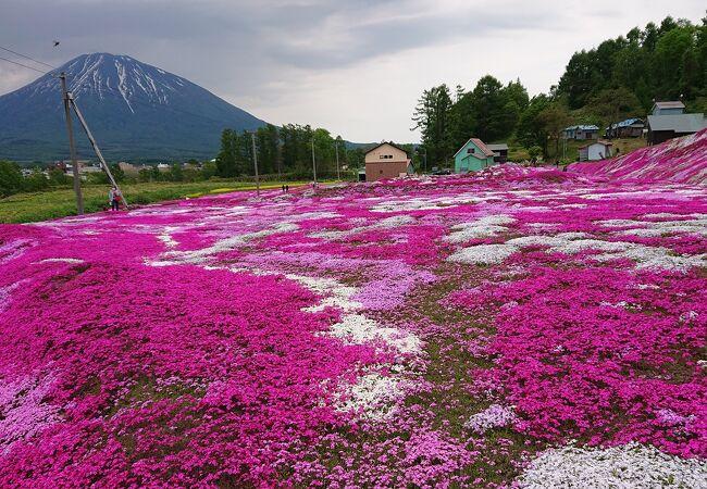 三島さんの芝ざくら庭園 駐車場