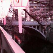 夜は桜色にライトアップされた目黒川沿いをきれいに見渡せました