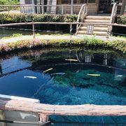 言葉では言い表せない青い池
