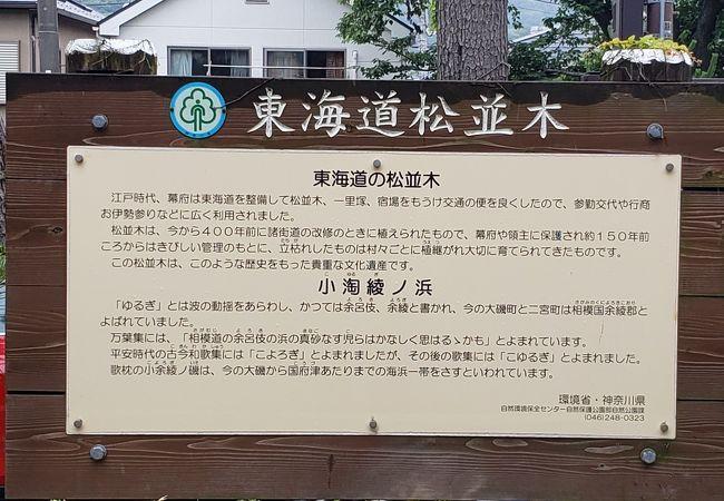 湘南地区には多いです