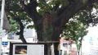 御薗の榎 (加納楽市跡)
