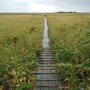 遊歩道の他、展望塔もあり、さらに場所によってはオホーツク海の景色も楽しむことが出来ます