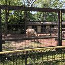 夢見ケ崎動物公園