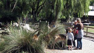 ウィロウバンク動物公園
