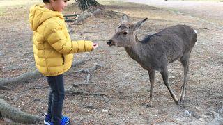 鹿との触れ合いを求めて