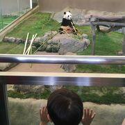遊園地と動物園が一体化!