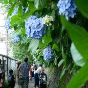 飛鳥山公園で紫陽花花見を
