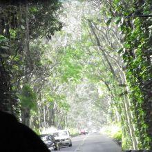 マルヒア ロードのツリートンネル