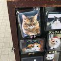 ハイブランドの猫ちゃんたちがたくさん