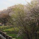 県営権現堂公園