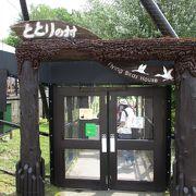 旭川市旭山動物園 ととりの村