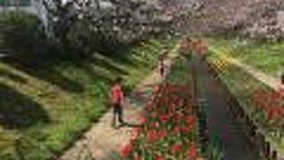 都筑区のお花見スポット