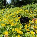 とても広い敷地に色々季節のお花が沢山咲いていて・1日ノンビリ出来そうですね。
