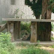 入場制限ありだけどパンダの見納めに