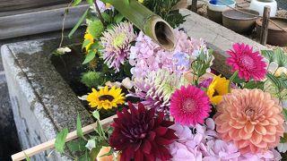 夏の日射しに輝く美しい花手水、ハス鉢、青紅葉見どころ色々ありです。