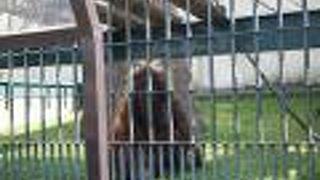 旭川市旭山動物園 オラウータン舎