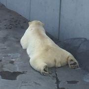 札幌市の円山公園にある大きな動物園です。