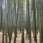 竹林に癒されます