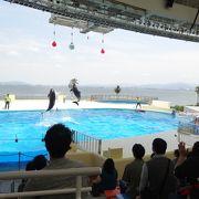 イルカショーはダイナミックな博多湾の風景を背景に