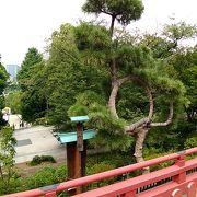 月の松も、きれいで、日本らしく、よく手入れがされているという感じ