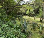都立八丈植物公園