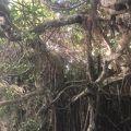 石垣島でカヤック