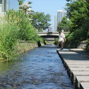 テレビ塔裏、人工の都市河川、創成川沿いに整備された公園
