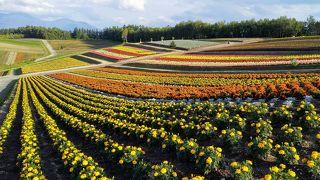 色とりどりのお花畑が広がる美しい丘「四季彩の丘」