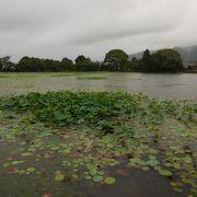 日本最古の人工池
