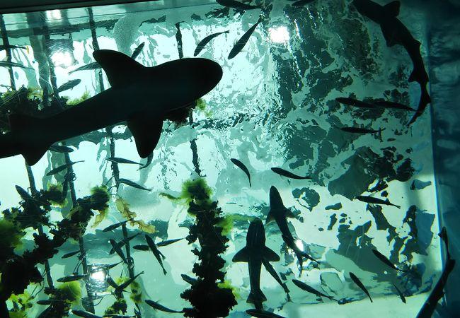 水族館 うみ の 杜