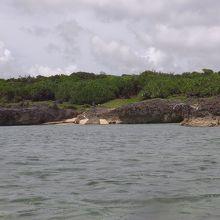 結構沖でもサンゴ礁は少なかったです。