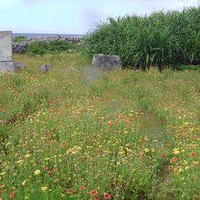 武士家跡の入り口です。 お花畑にかすかなふみ跡があります。