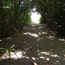 島内の静かな遊歩道です。