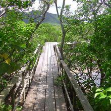 マングローブ林を巡る木道です。