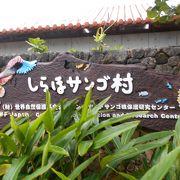 サンゴの研究センター