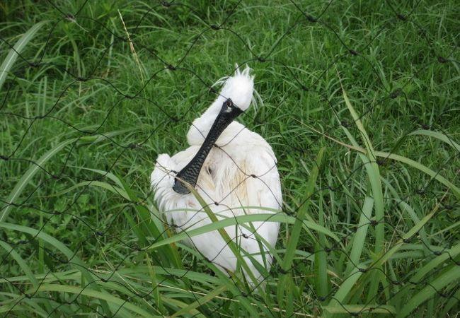 葛西臨海公園 鳥類園