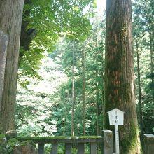 榛名神社 千本杉