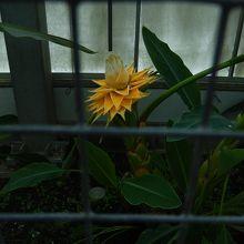 名前を忘れたがきれいな花