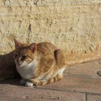ホテルの敷地にはこの猫ちゃんがいます