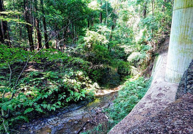 横浜とは思えない渓谷と森