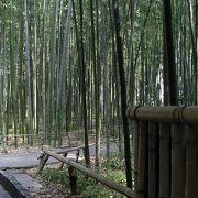 のんびり歩いて、竹林の風景を楽しみました