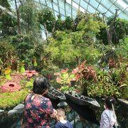 只々感心の植物園