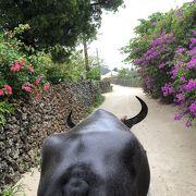 のんびり、ゆったり、心洗われる水牛車で竹富の街歩き
