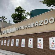 むむむ~【円山動物園】