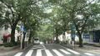 桜丘町 さくら通り